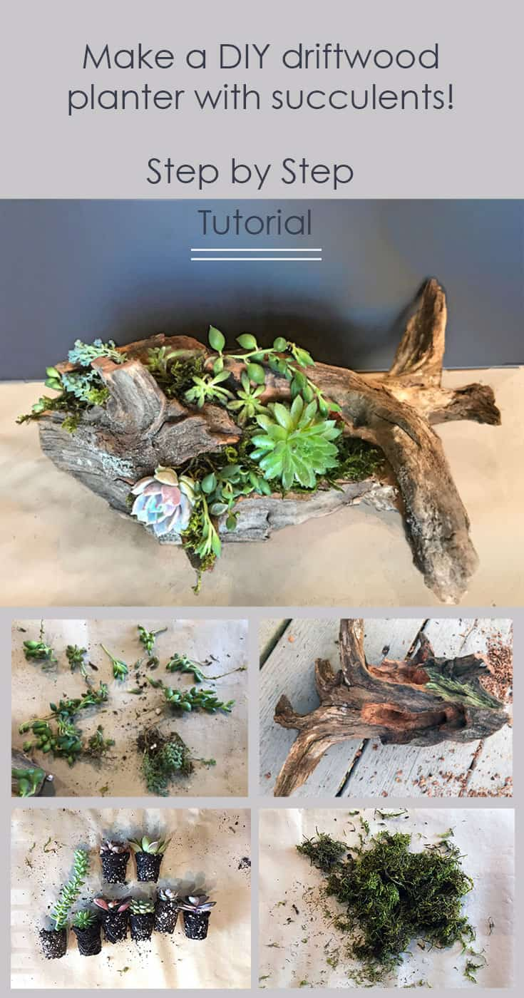 Cedar driftwood planter with succulents