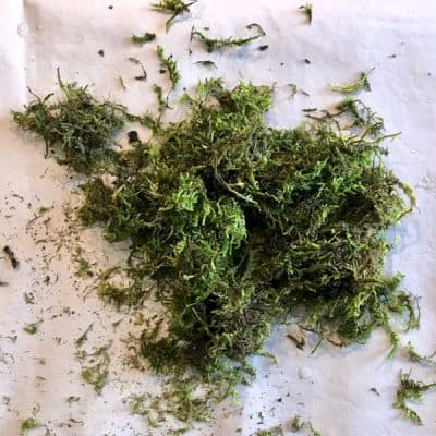 moss on table
