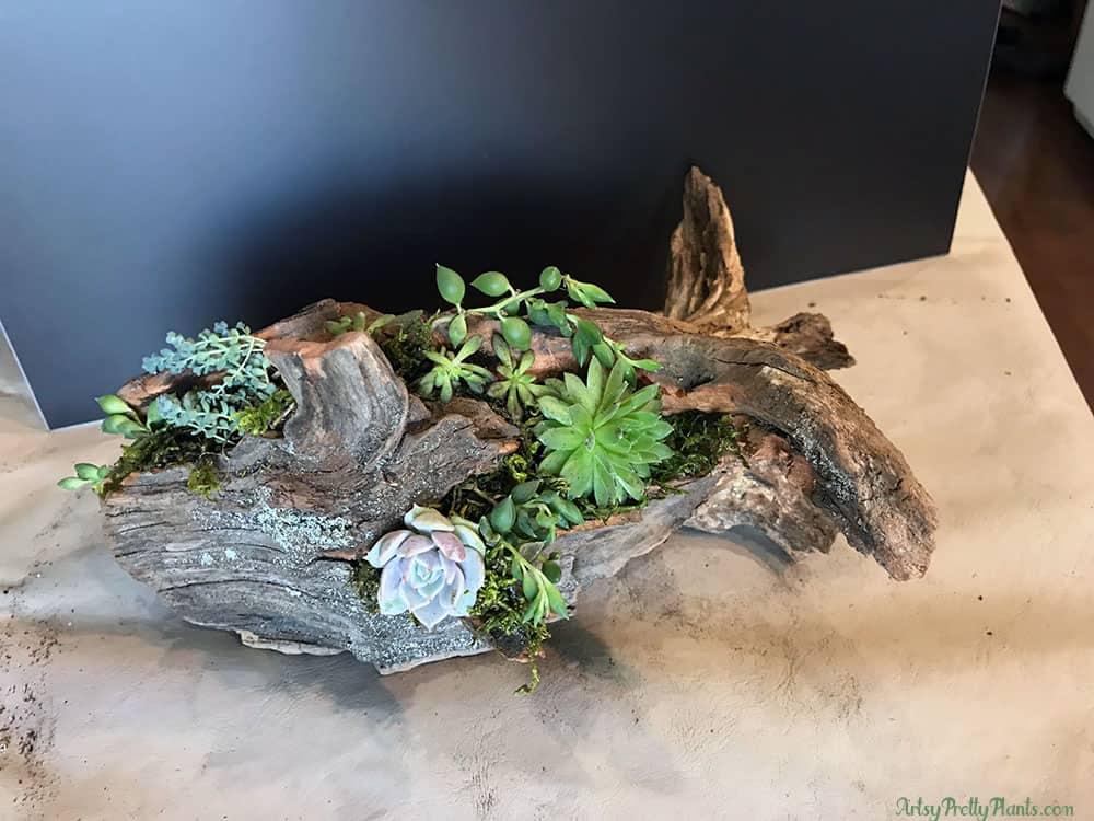 DIY Cedar Tree Succulent Planter
