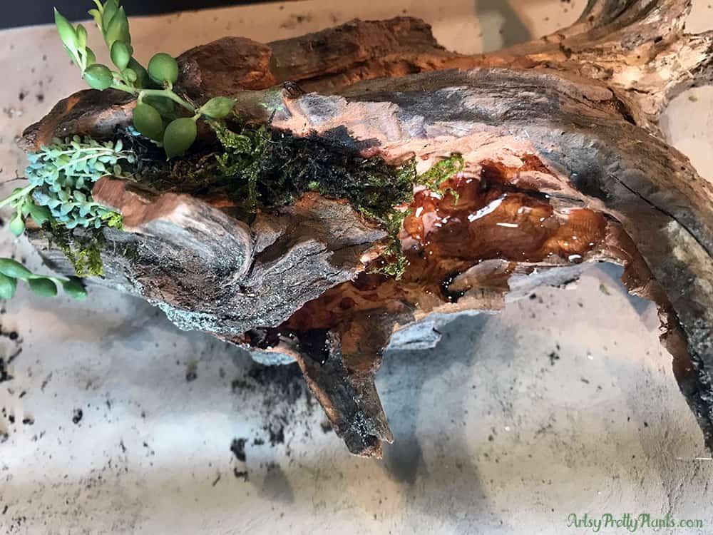 DIY | Glue for succulents