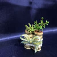 DIY cork succulent planters wrapped in bow