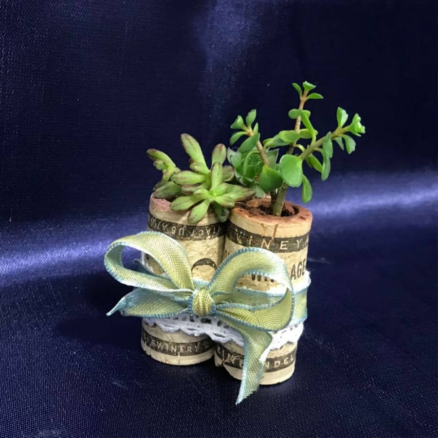 Succulent planters made from wine corks