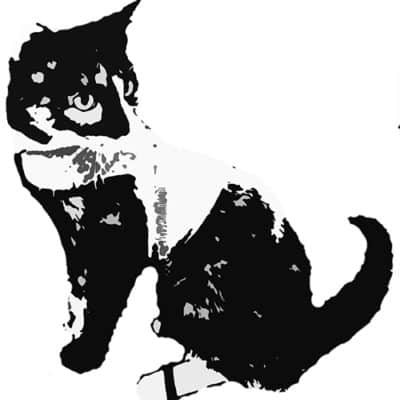 Cat with background deleted & transparent