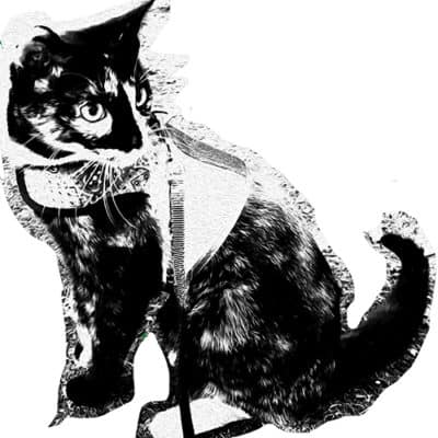 Cat with background partially erased