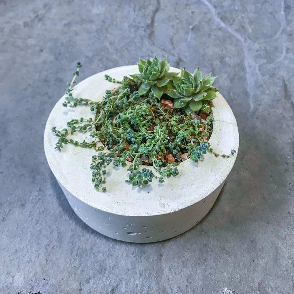 Modern concrete succulent planter