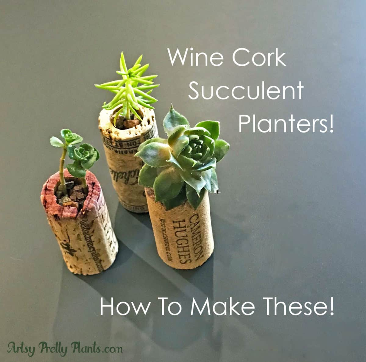 Diy Wine Cork Succulent Planters Detailed Step By Step Tutorial