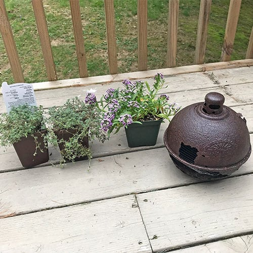 plants lined up for DIY planter