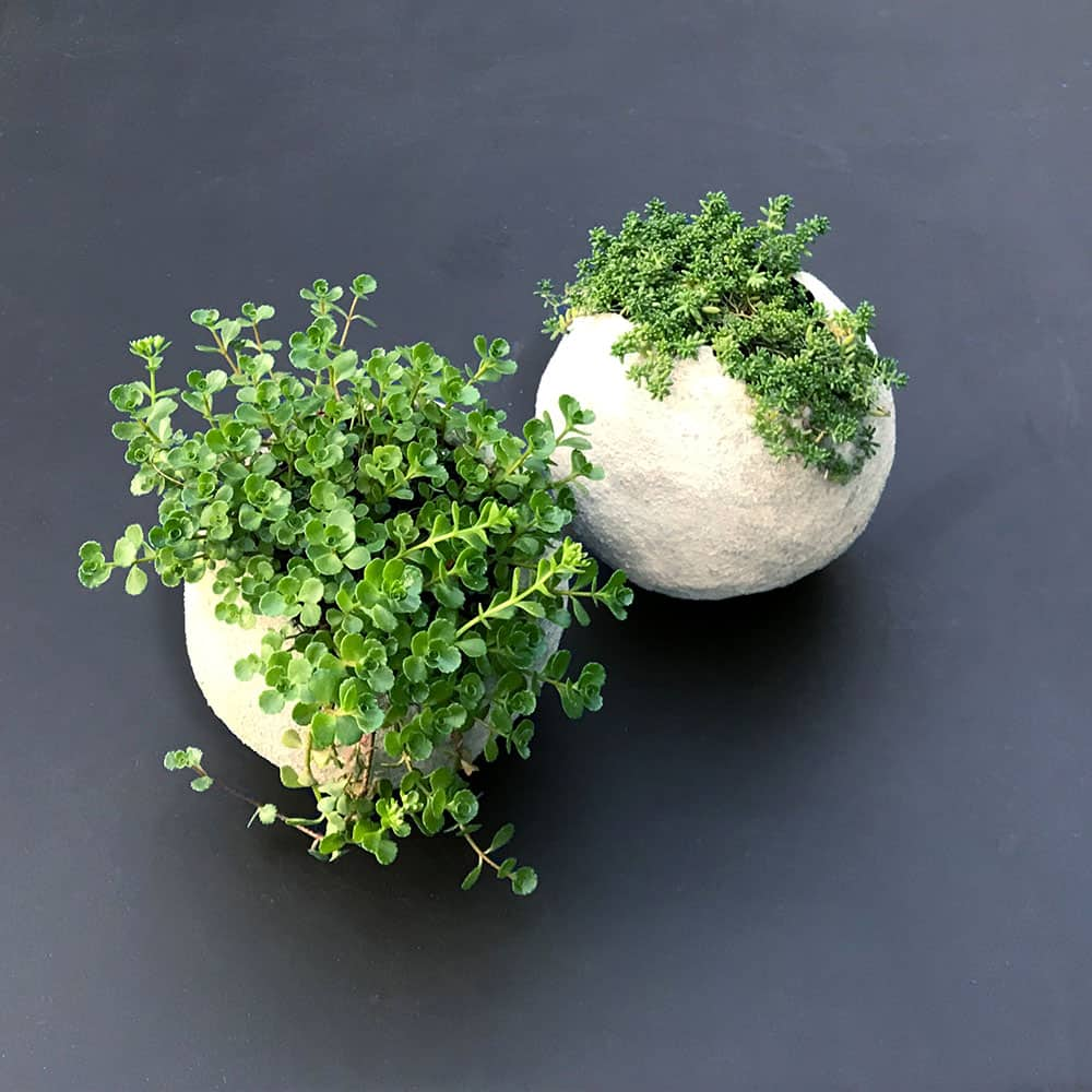 Cement Balloon Planters with plants