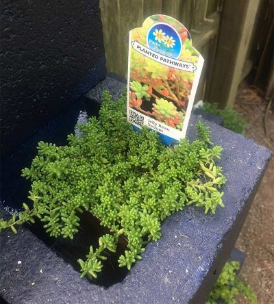 cinder block planters with plant inside