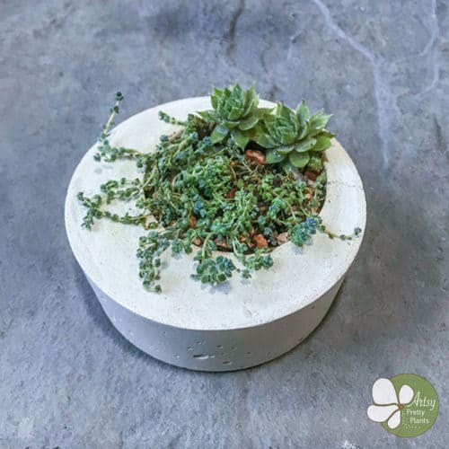 Succulent Planter made of concrete