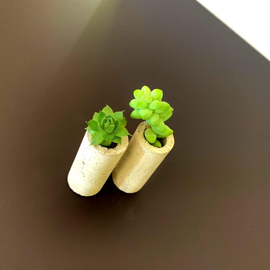 succulents in concrete wine corks