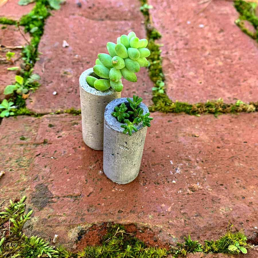 succulents planted in DIY concrete wine corks