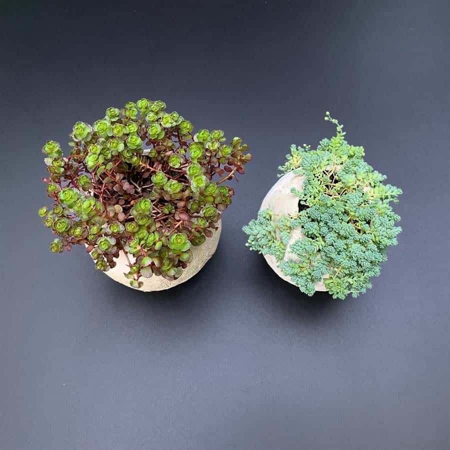 plants in balloon shaped cement pots