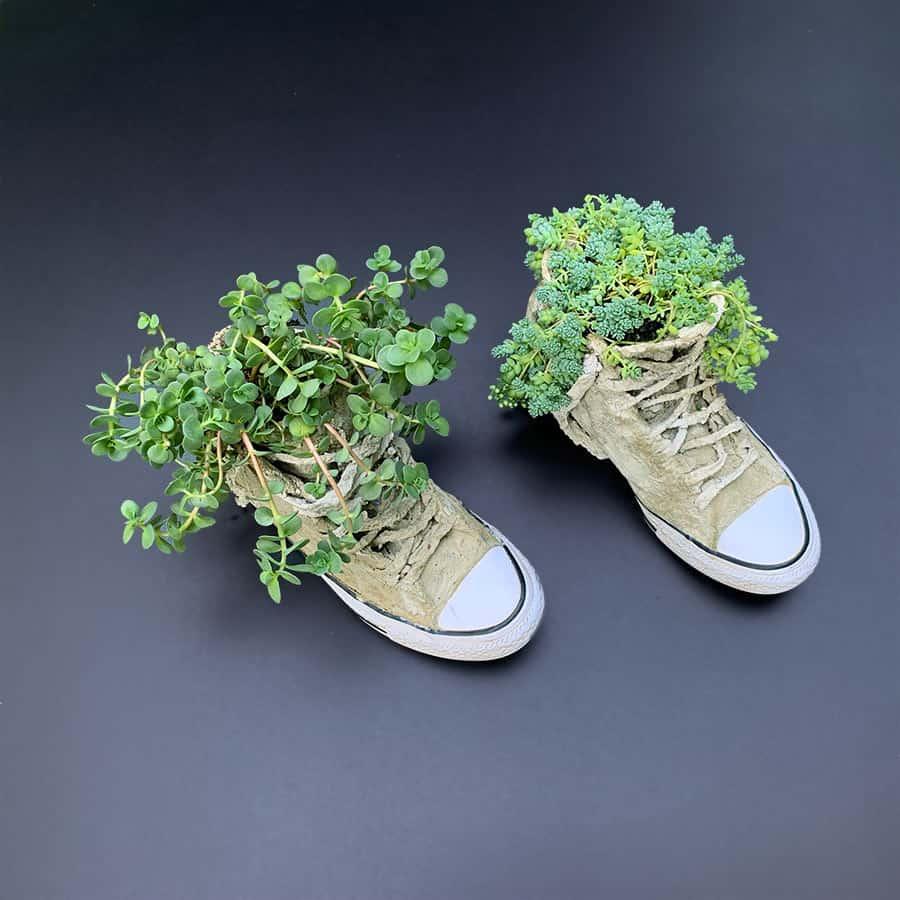plants inside DIY cement sneakers