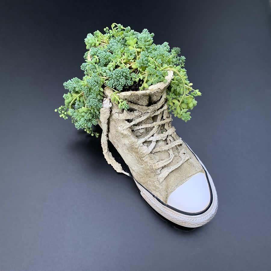 plant inside cement sneaker