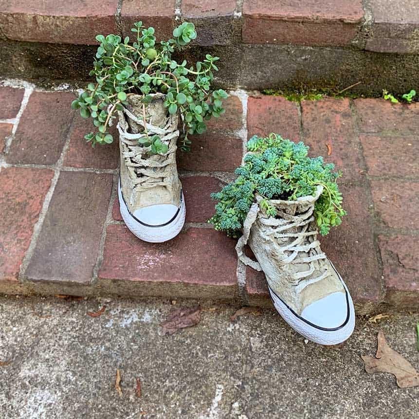 plant inside cement sneaker on bricks