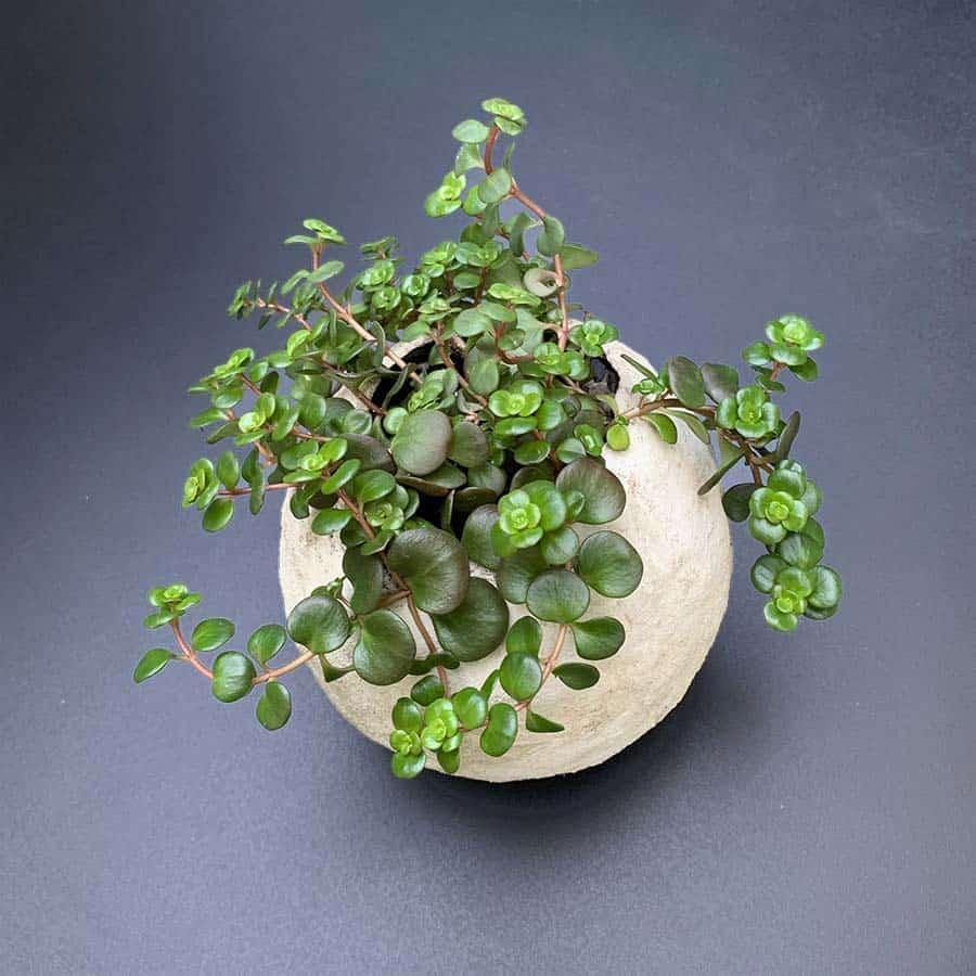 plants in round cement planter