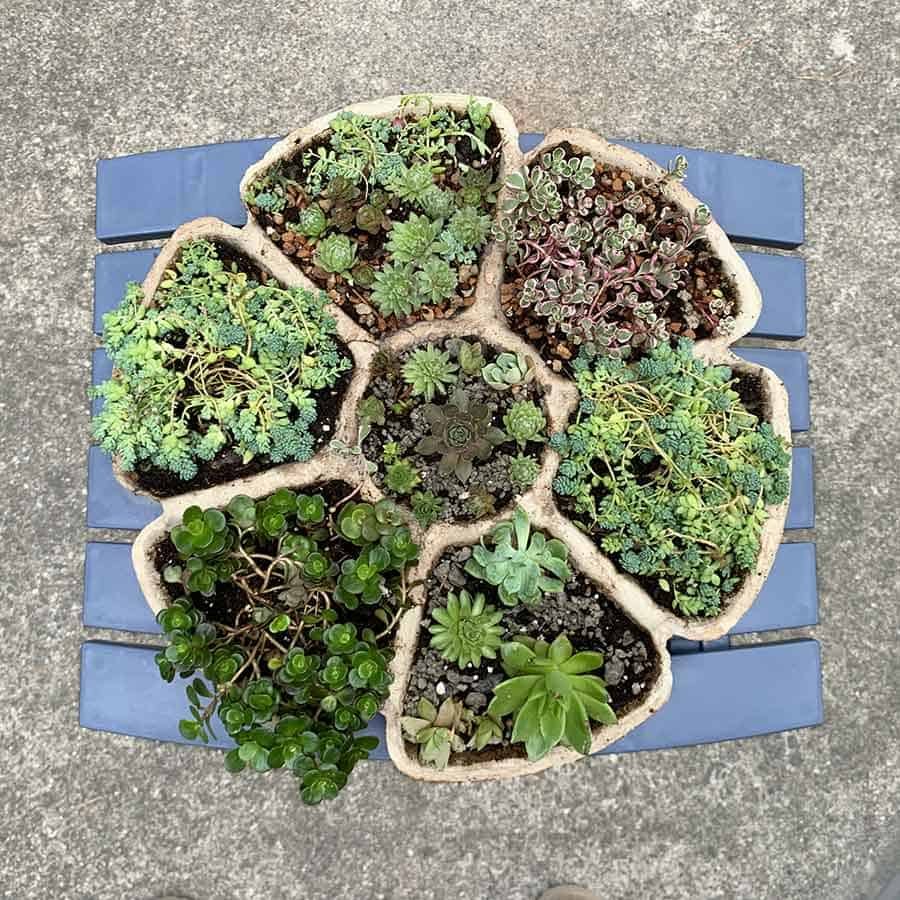 cement succulent planter homemade
