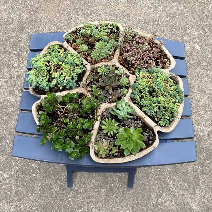 homemade succulent planter