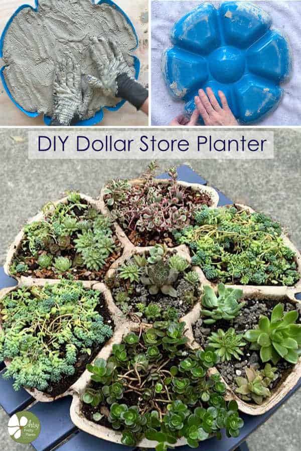 DIy succulent planter made of cement
