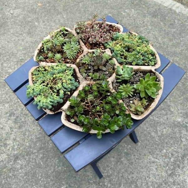 cement planter with succulents