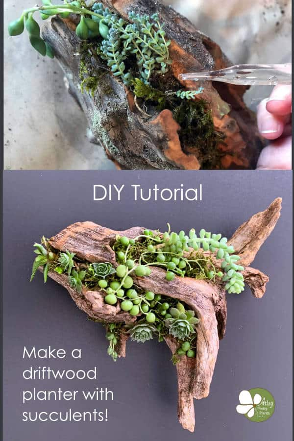driftwood with succulents a d eyedropper