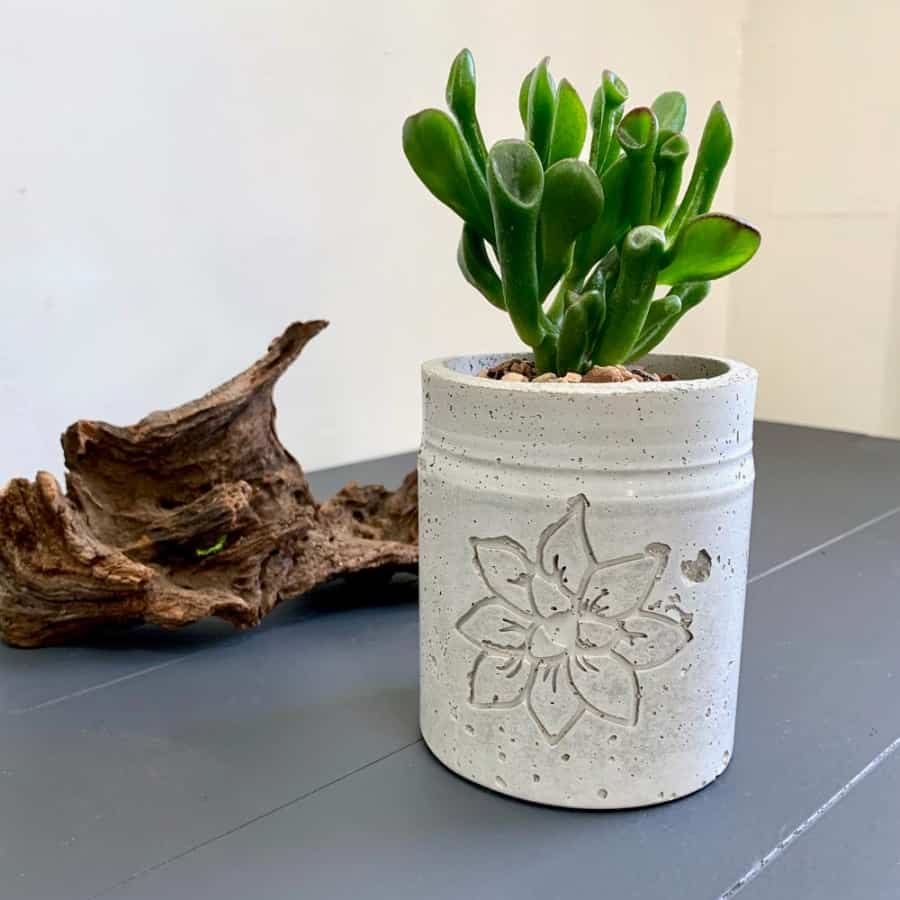 DIY Cement Planter With Crassula and Recessed Design and driftwood