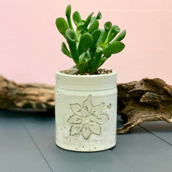 Cement Planter With Succulent Relief Design with driftwood