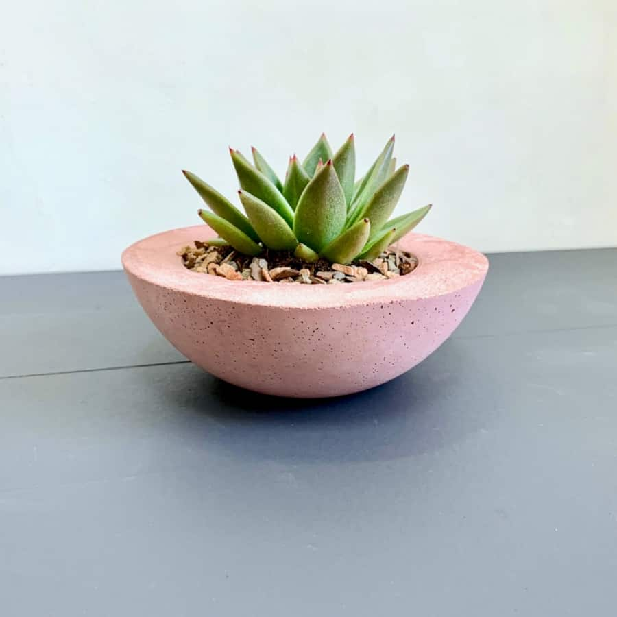 pink cement succulent planter