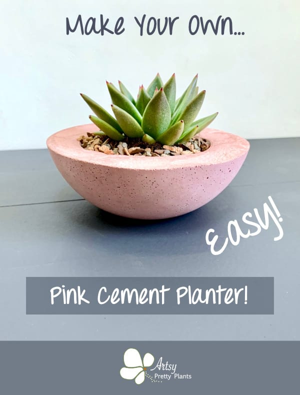 DIY Cement Succulent Planter