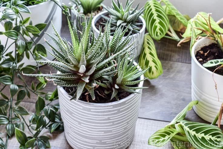 21 Easy DIY Planter Projects painted planters