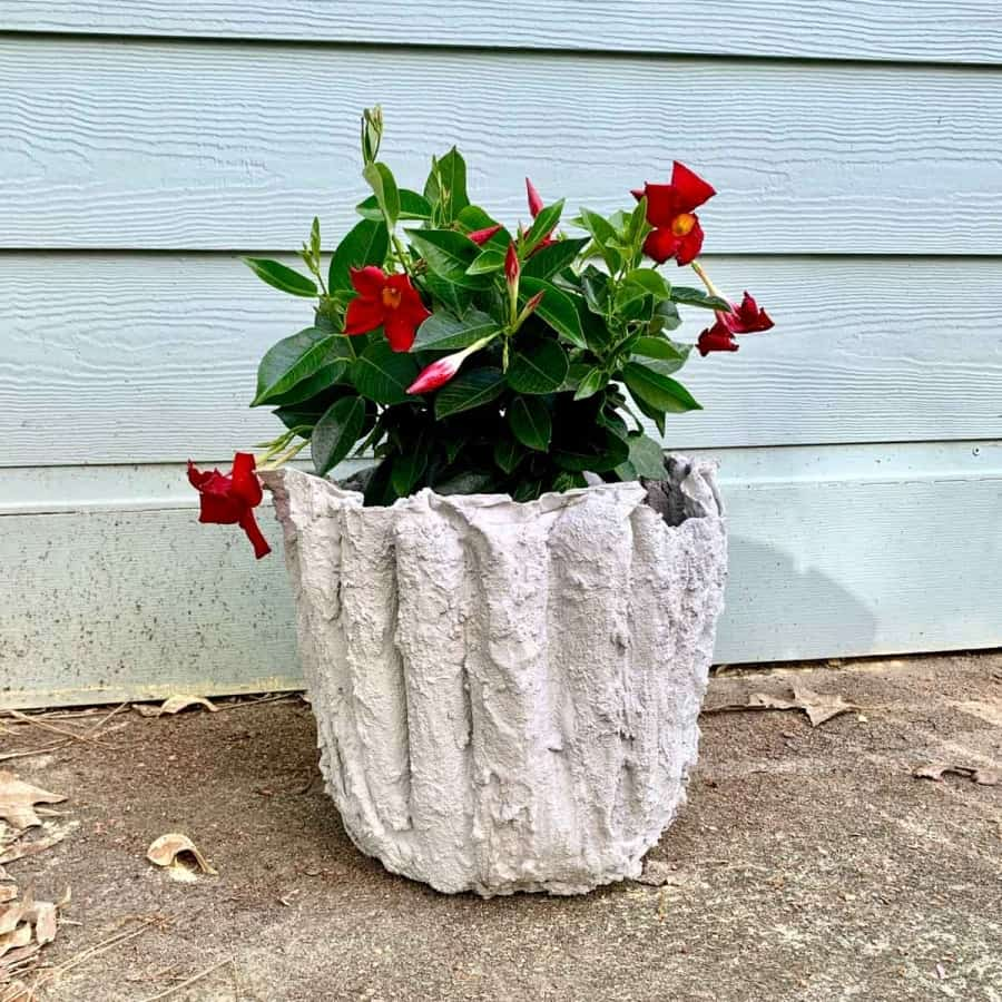 A cement & fabric flower pot with red flowers inside