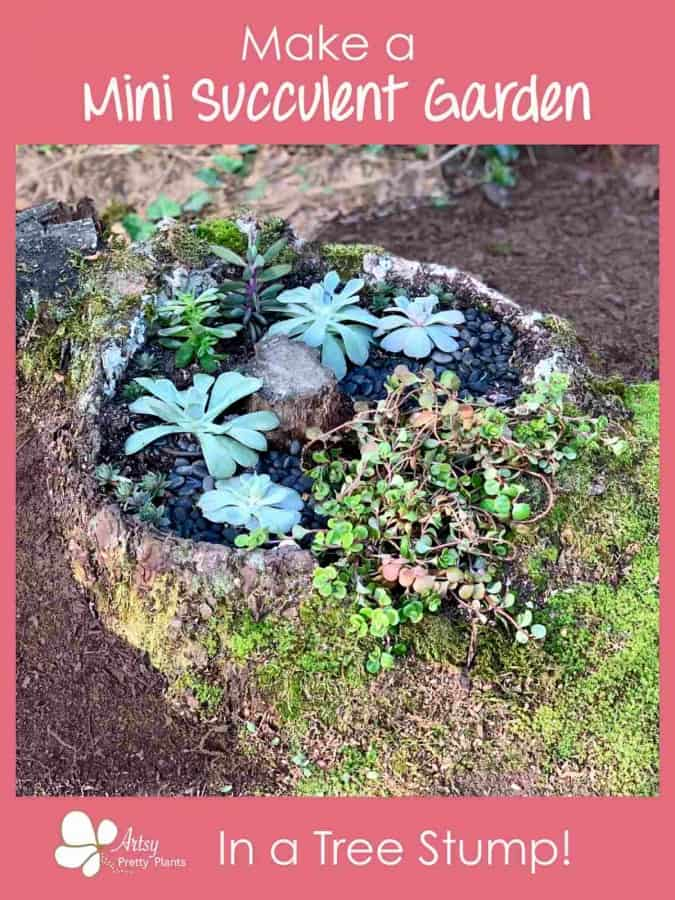 How to make a Tree Stump Mini Succulent Garden