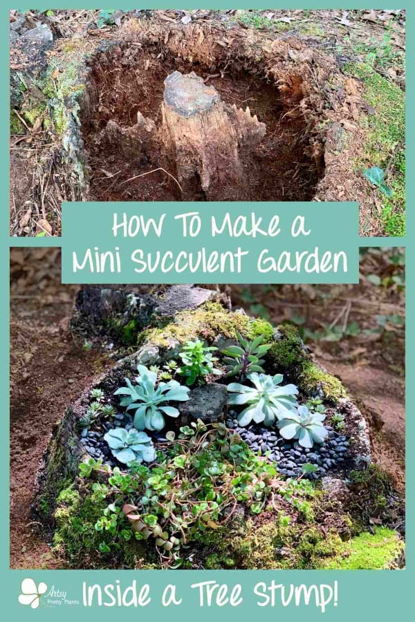 Tree Stump Mini Succulent Garden