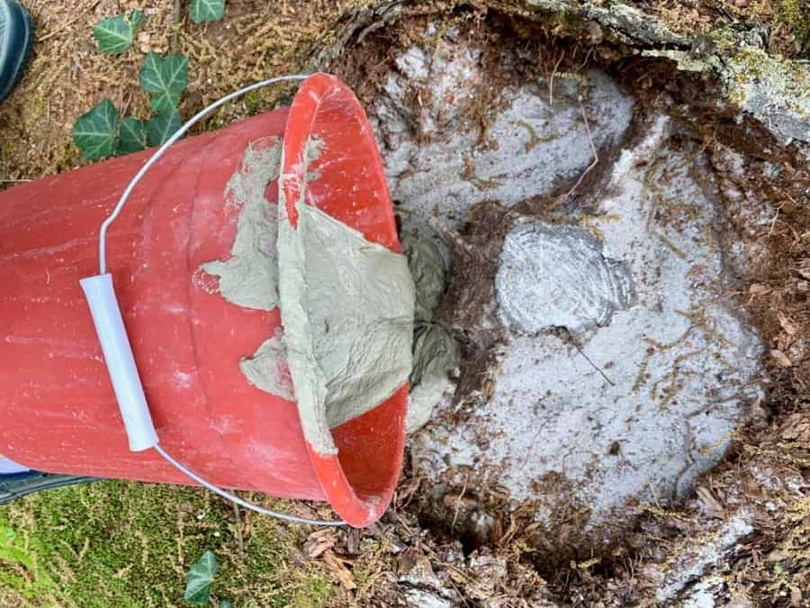 pour cement into tree stump