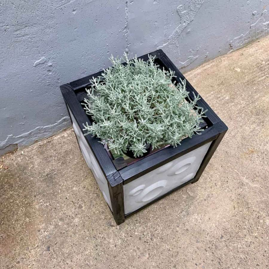 top view of modern black and grey 3d cement tile planter box with silvery gray plant inside