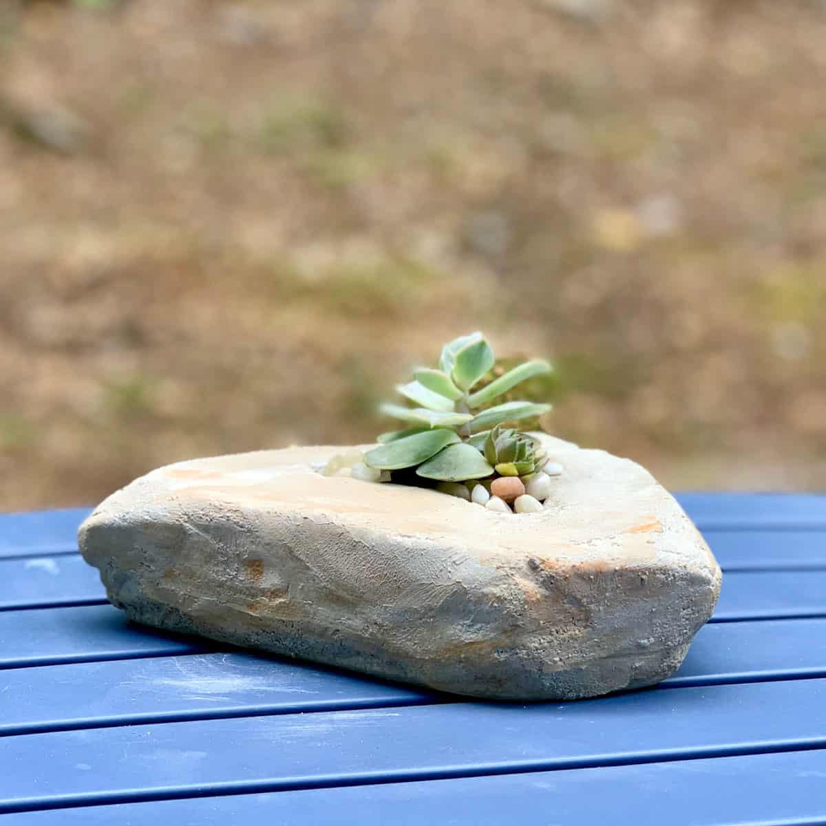 a rock made from cement with succulent inside