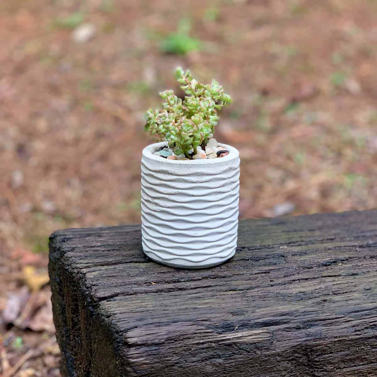 cement planter made from DIY silicone mold on railroad tie