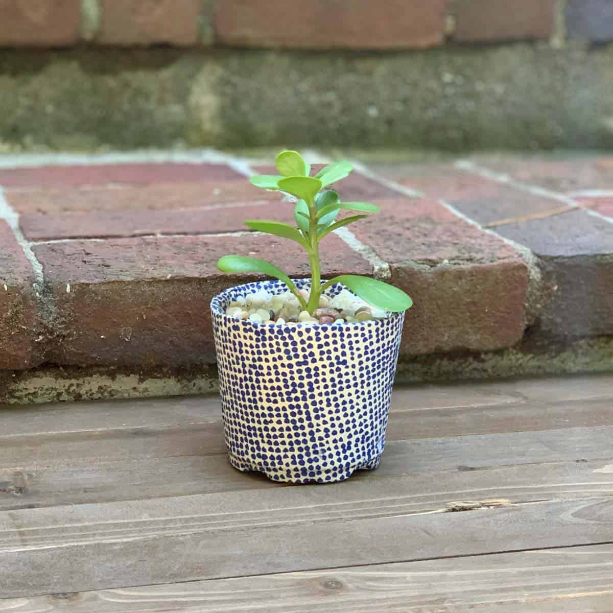 DIY durable cement planter made from a plastic pot on wood boards