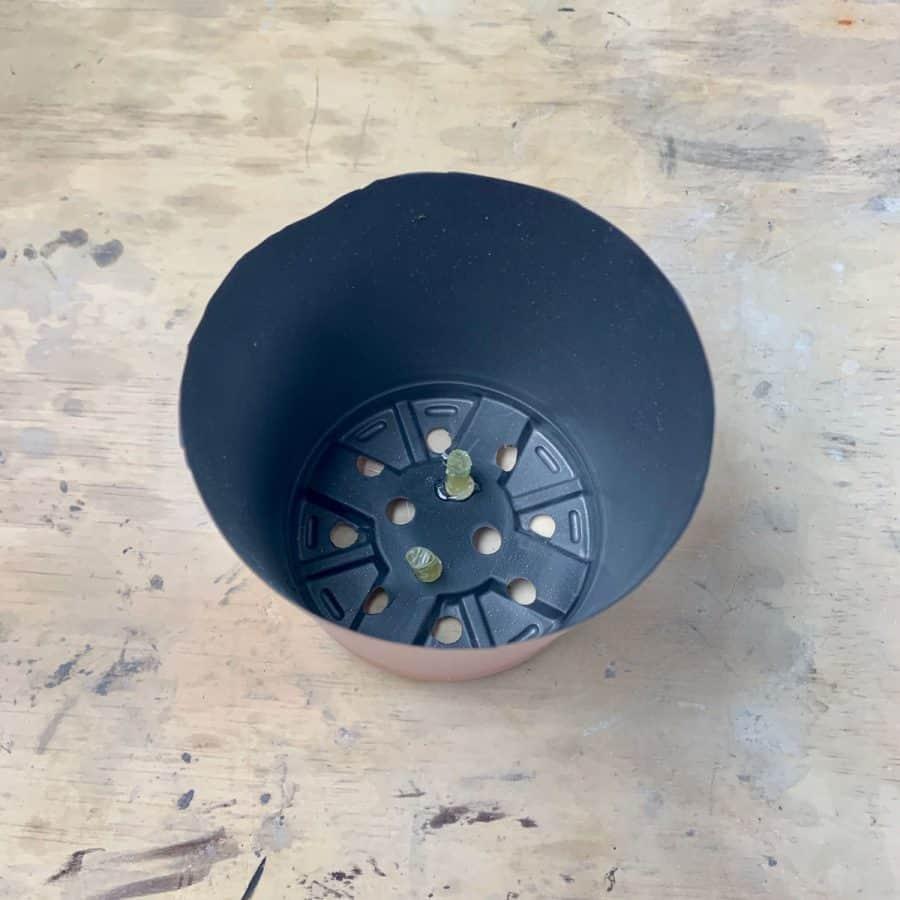 plastic pot with planter drainage straws glued inside
