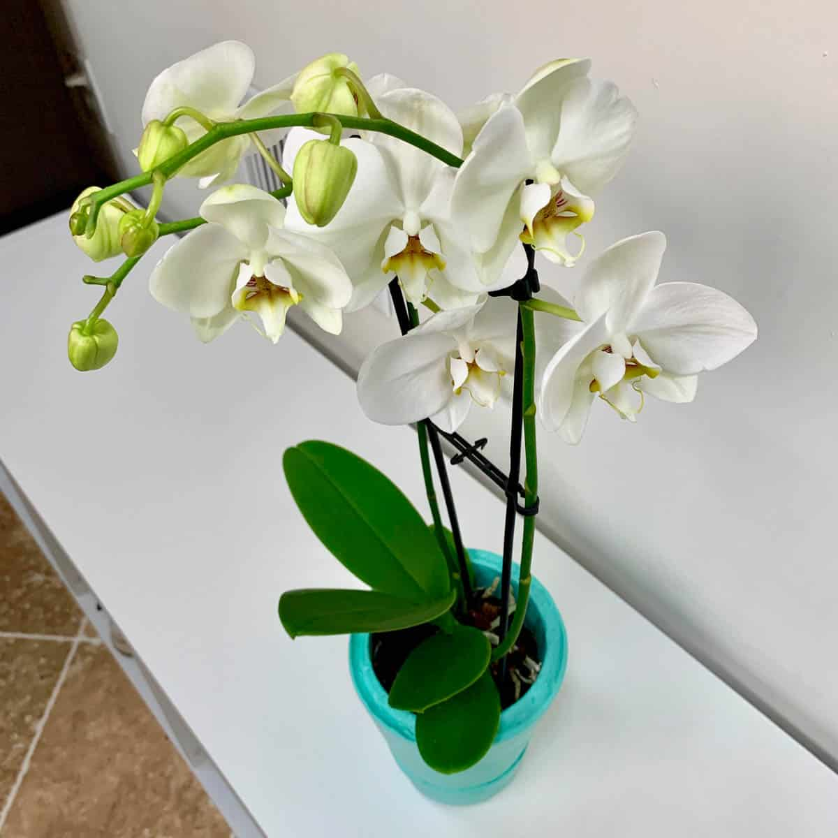 orchid in concrete DIY self watering planter