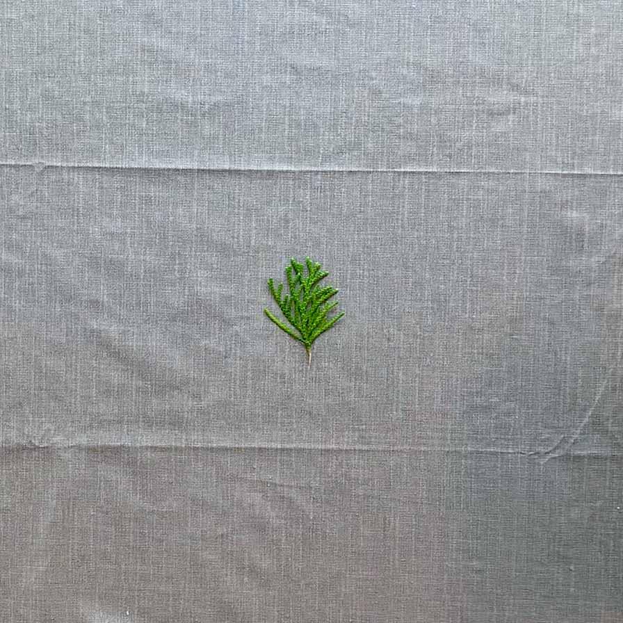 cedar leaf to use as aird dry clay imprint