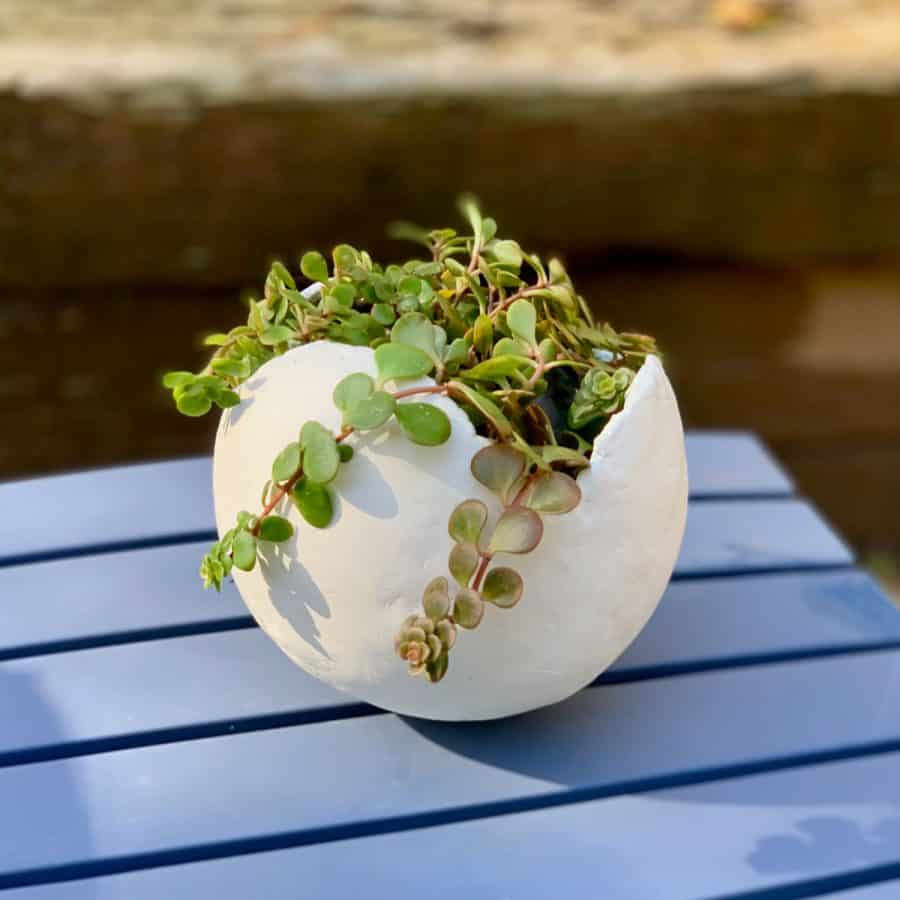 clay balloon planter on a blue table with crawling succulents
