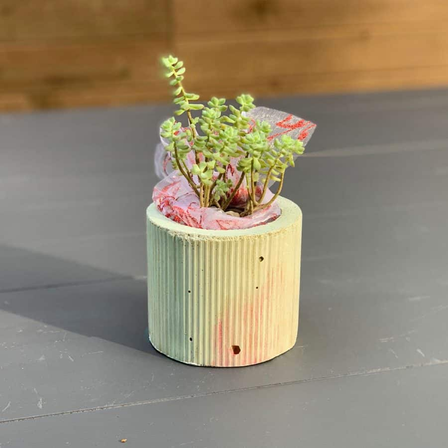 christmas looking concrete planter on wood planks