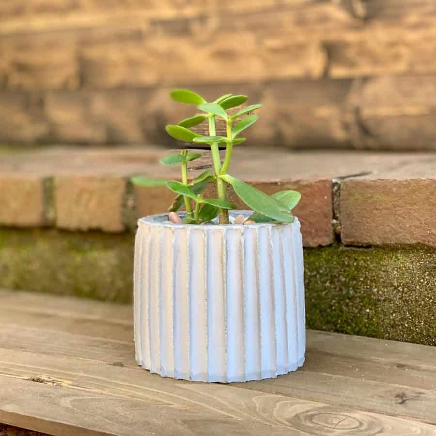 DIY Fluted Concrete Planter on wood with brick background