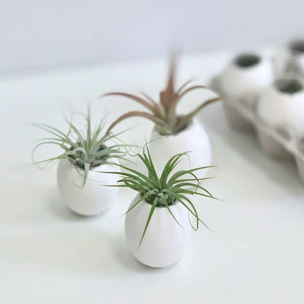 Concrete Eggshell Planters For Air Plants