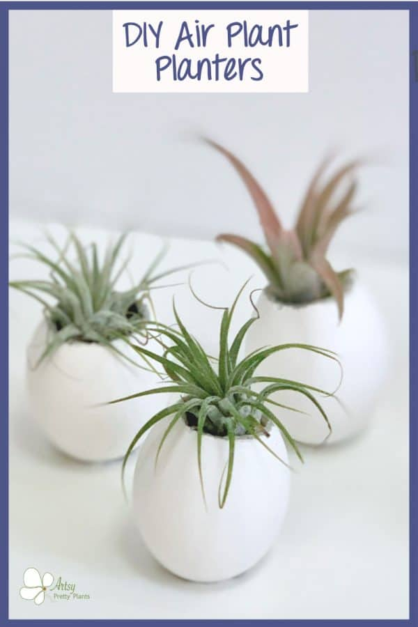air plants in eggshells