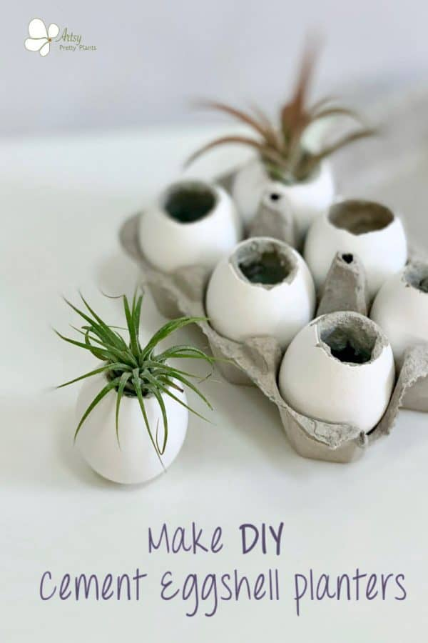 Concrete Air Plant Eggshell Planters in a carton