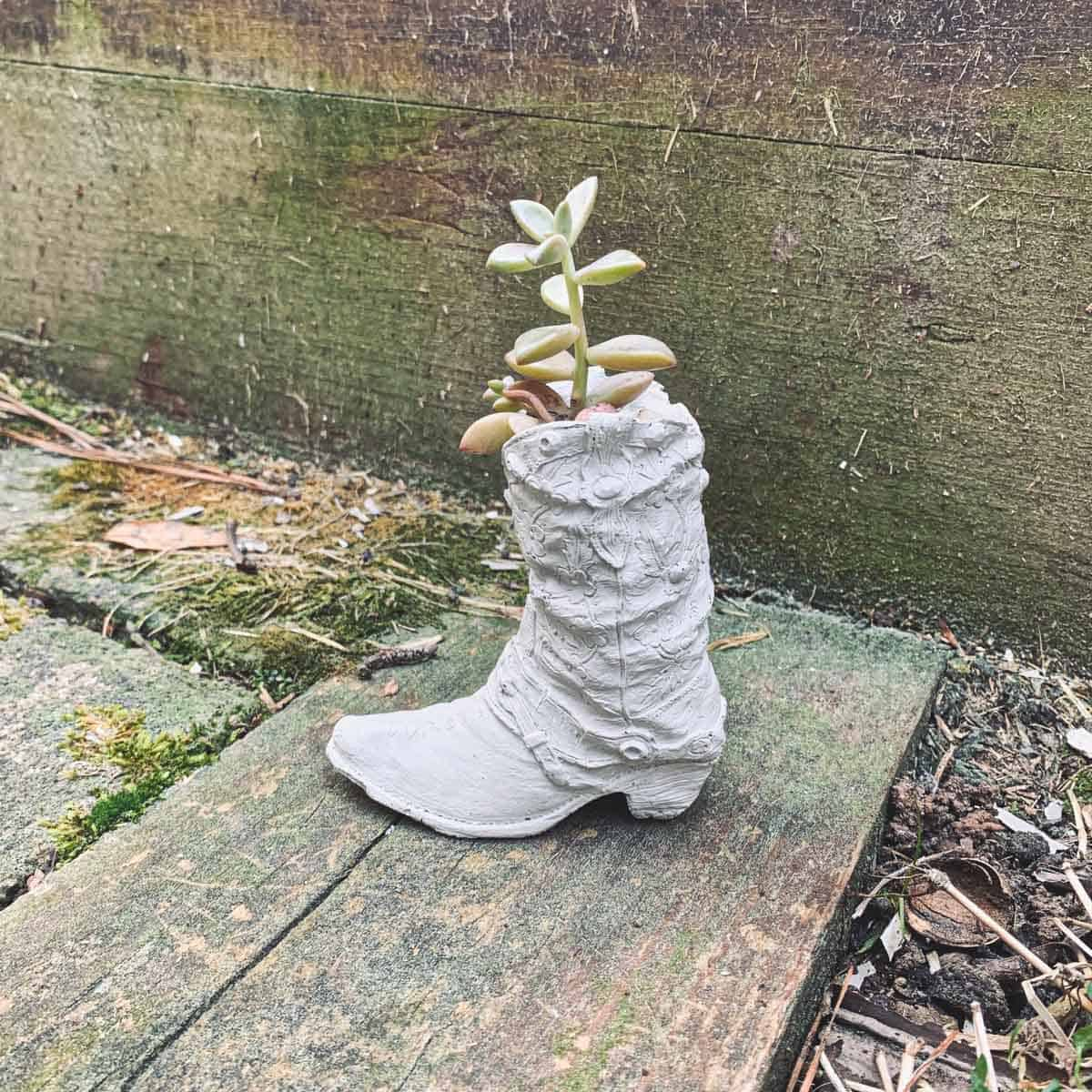 DIY mini cowboy boot planter made from a DIY latex mold. Succulent planted inside.