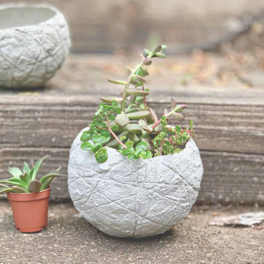 textured cement balloon planter with succulents inside on steps with succulent next to it in small pot